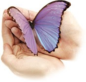 handbutterfly